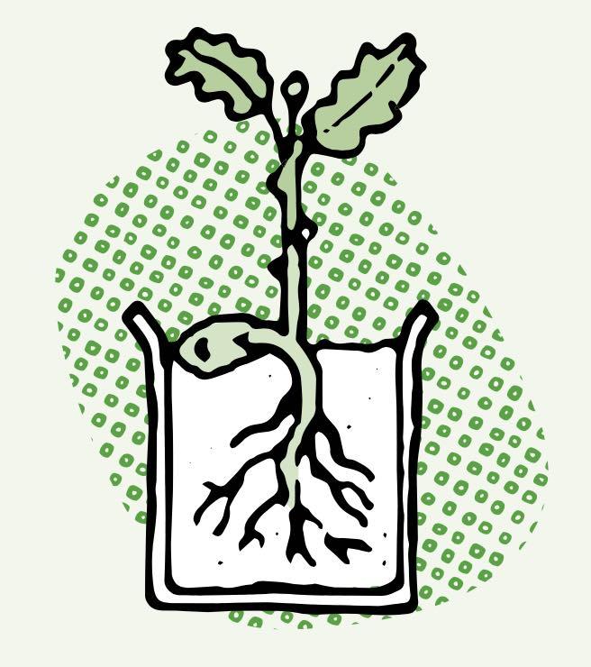Semer des graines en pot